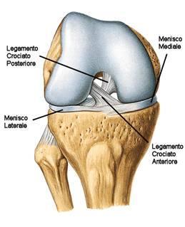 Le lesioni del legamento crociato anteriore: il