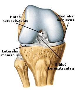 boka osteoarthritis kezelése kenőcsökkel fáj a bal kéz ízülete