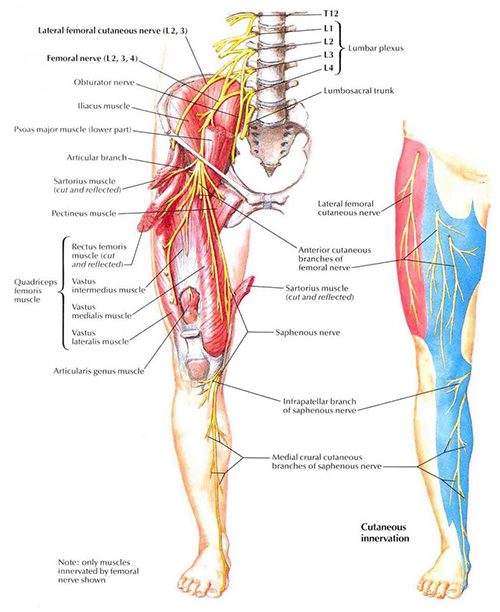 "the pubic inguinal pain syndrome or ""sportsman groin"" 