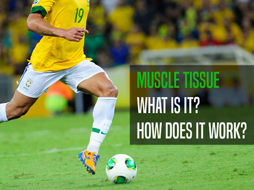 Skeletal muscle tissue: what is it...